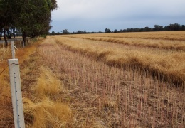 Farming around Tocumwal