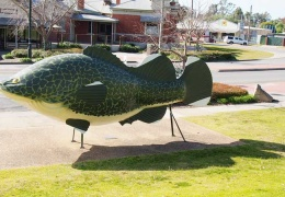 The BIG COD at Tocumwal