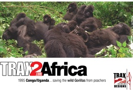 Treking mountain gorillas