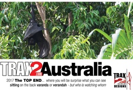Top end fruit bat