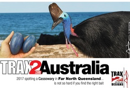 Cassowary is the 3rd largest bird in the world