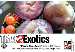 trax2 exotics purple star apple