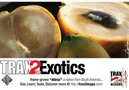 Exotics the abiu healthy fruits