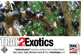 Trax2 Postcard on the exotic jaboticaba fruit tree