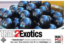 Trax2 Exotics jaboticaba tree cherry