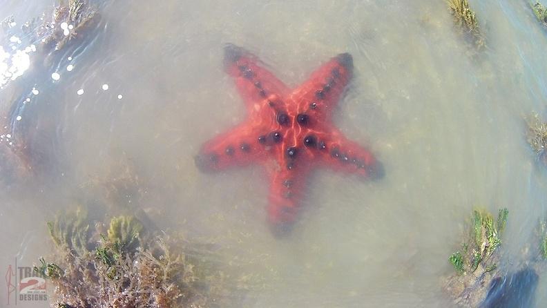 snorkeling King Reef - Trax2 Australia
